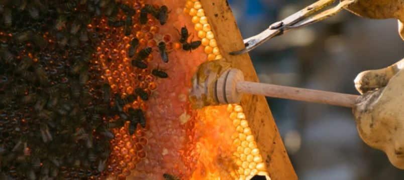 miel casera de españa